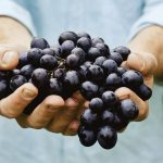 Close up shot of hands holding a bushel of grapes